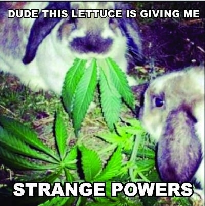 Powerful lettuce is powerful