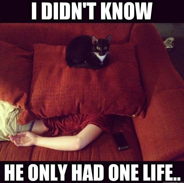 Jealous cat is innocent
