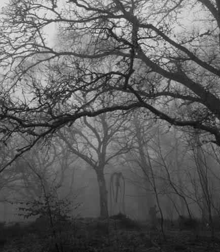 Nice walk into the woods