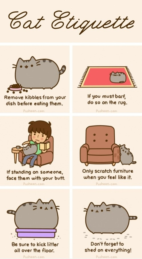 Your cat should know this