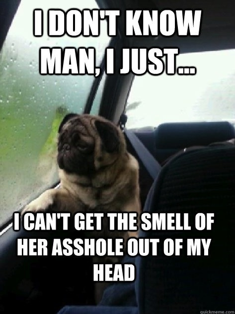Introspective Pug strikes again