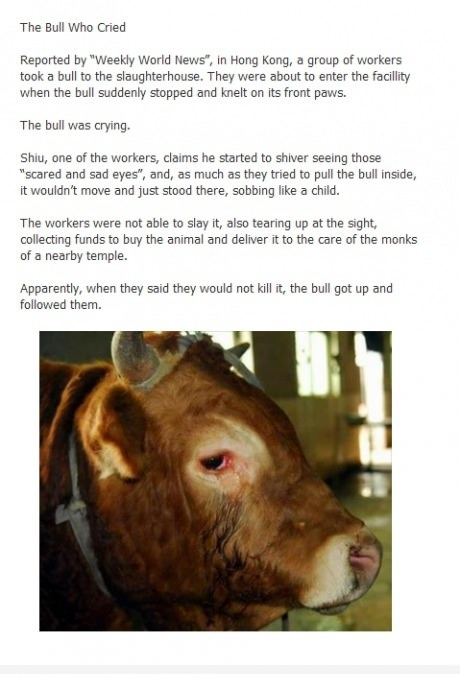 The bull who cried