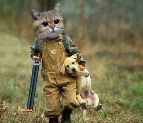 Googled cat hunter