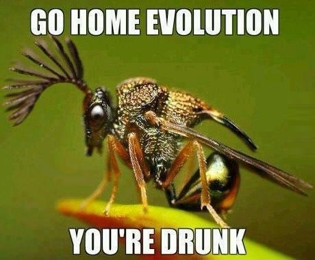 Evolution done wrong!
