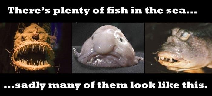 Plenty of fish..
