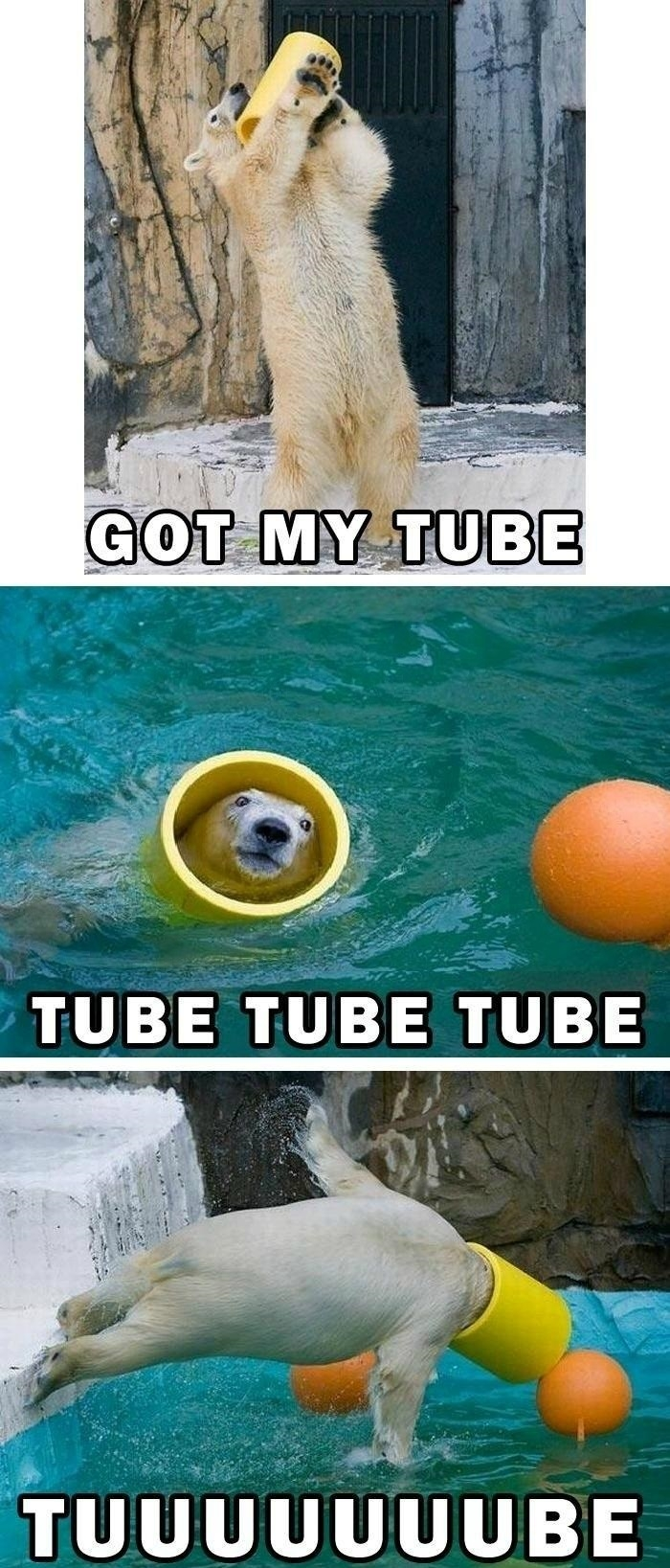 Polar bear tube