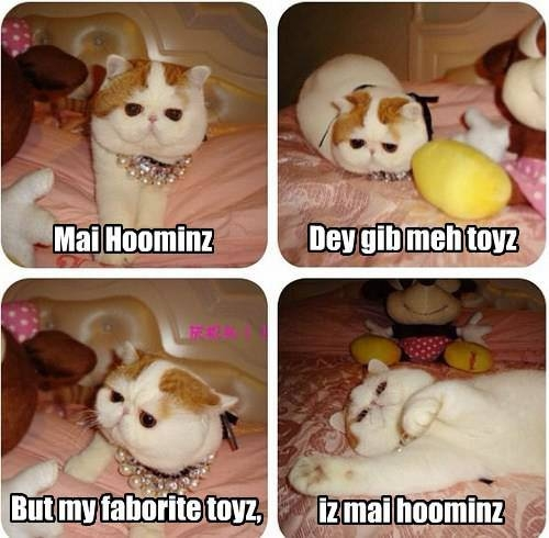 Hoomins make best toyz