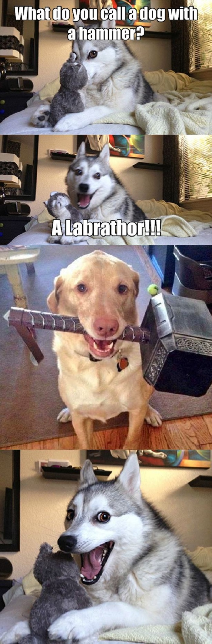 A dog with a hammer