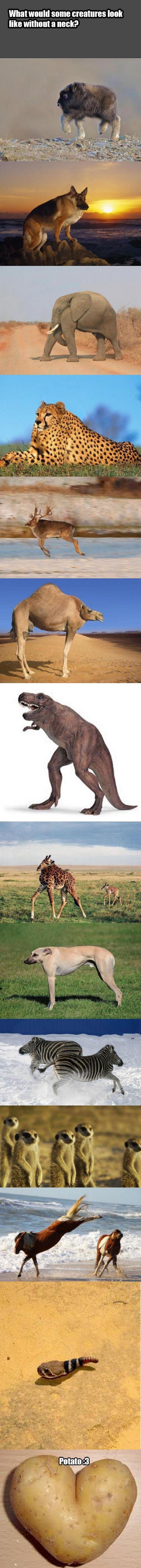 Image of: Necks Meme Funnyjunk Animals Without Necks
