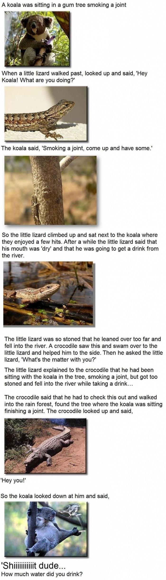 The koala and the lizard