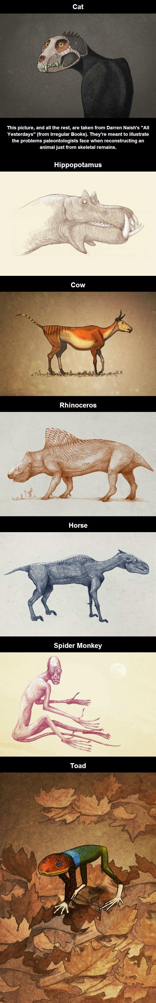 Shrink-wrapped animals  Shrinking Animals