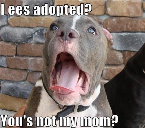 I'm adopted???