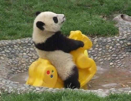 Panda Play Time