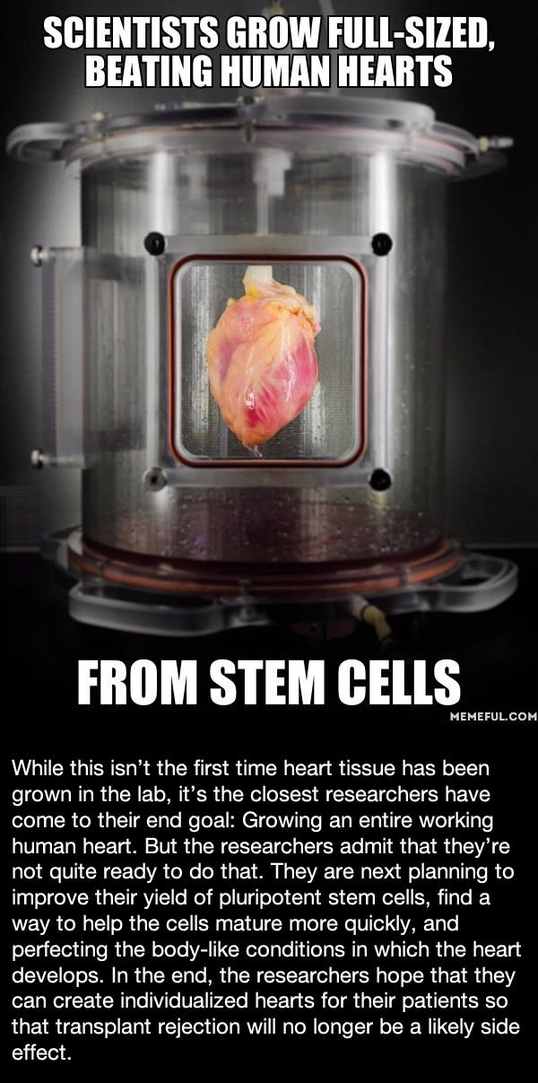 Beating hearts from stem cells