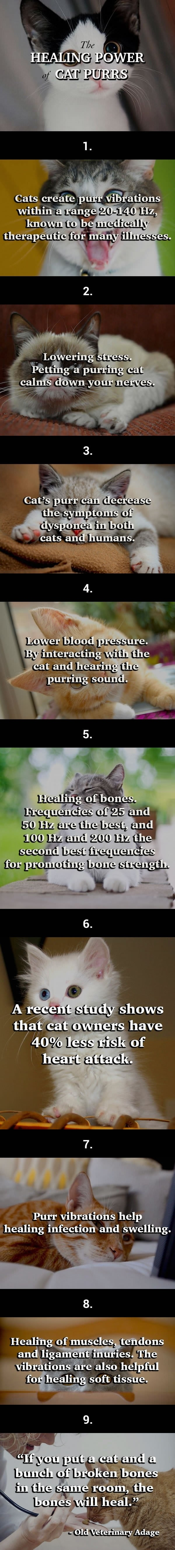 A cat's purr may help you live longer
