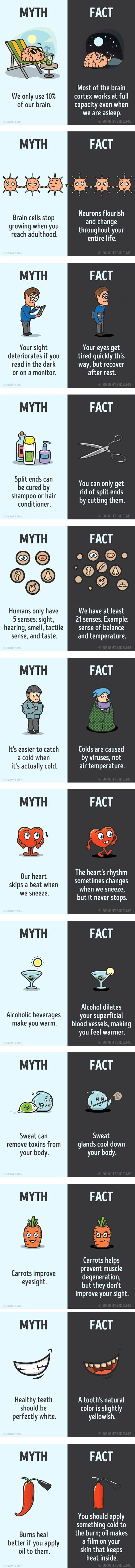 Myths about the human body