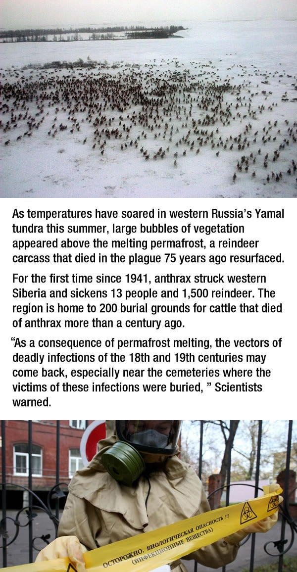 Siberia is dealing with an Anthrax outbreak