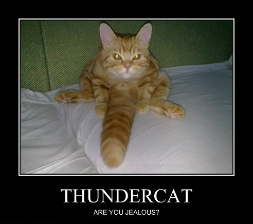 Thundercat Pictures on Thundercat