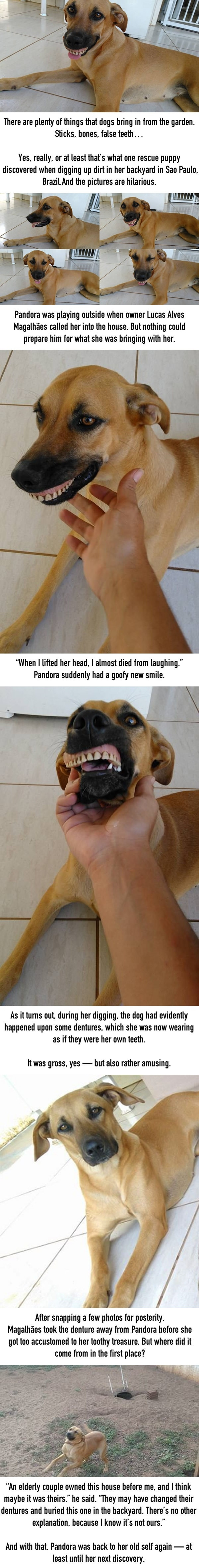 man is shocked when his dog walks in with a weird new smile