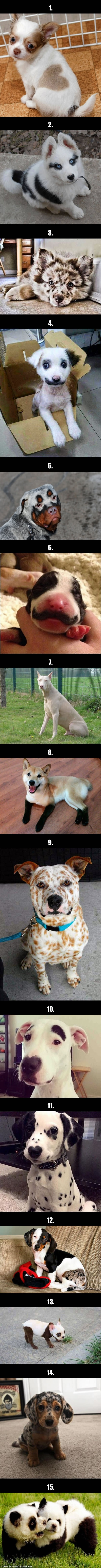 Dogs with strange coloured fur