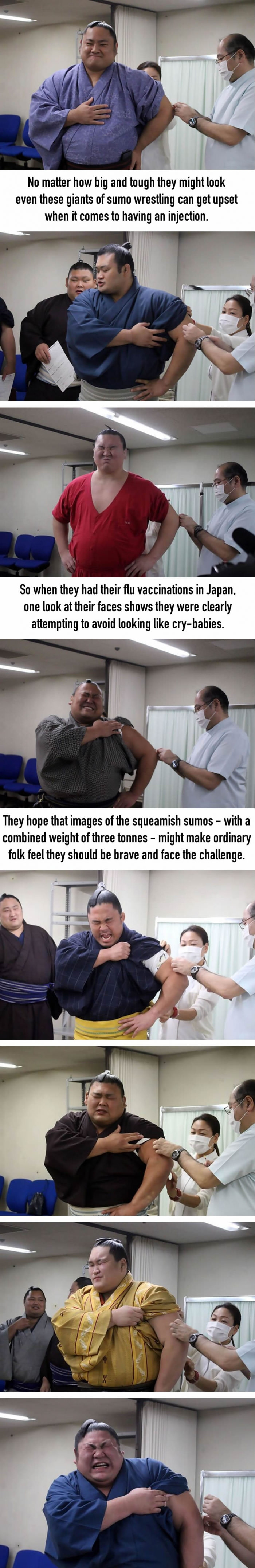 Sumo wrestlers wince in agony while having flu jabs