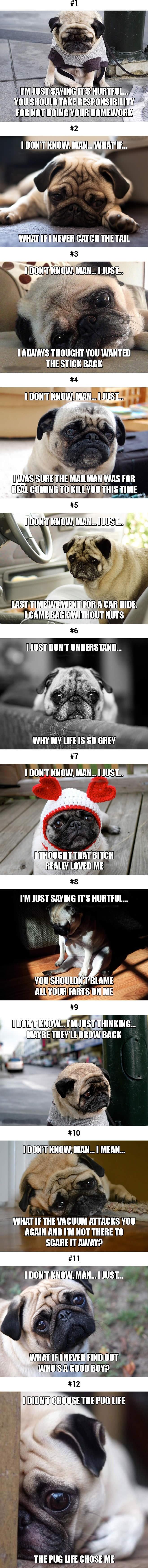 This sad pug will make you smile