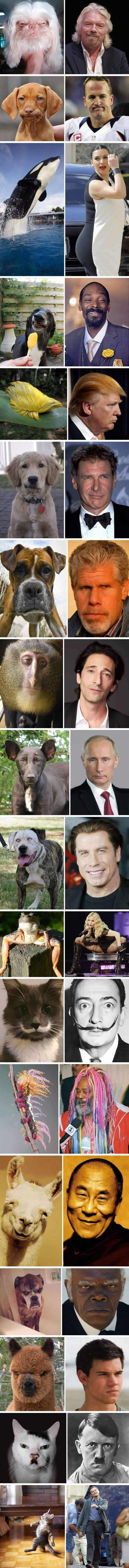 Celebs and their animal lookalikes