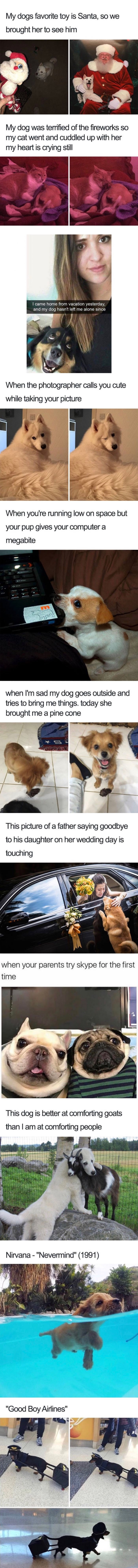 Dog memes are so heartwarming
