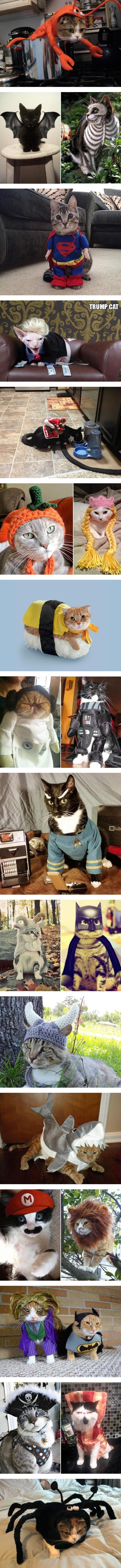 Halloween cat costumes