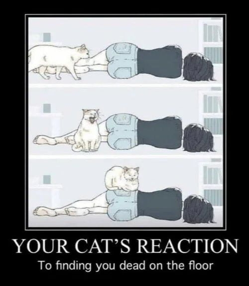 Your cat's reaction