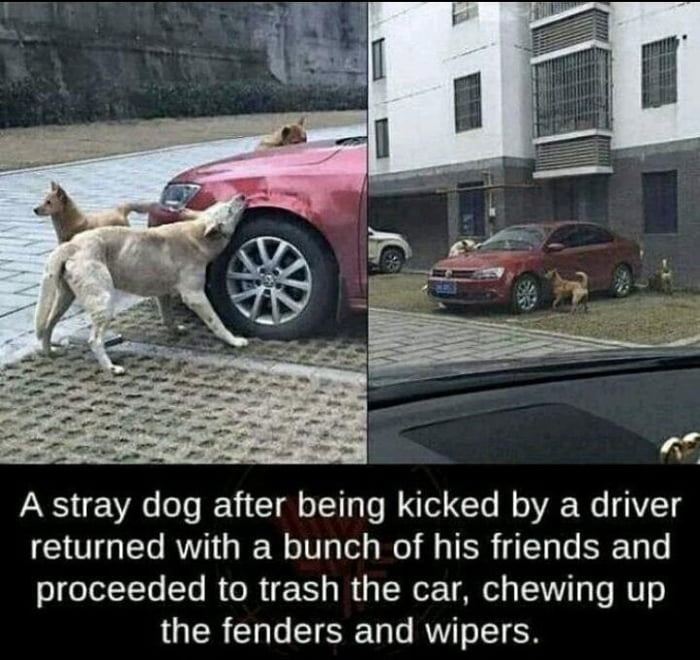 Stray dog kicked by driver