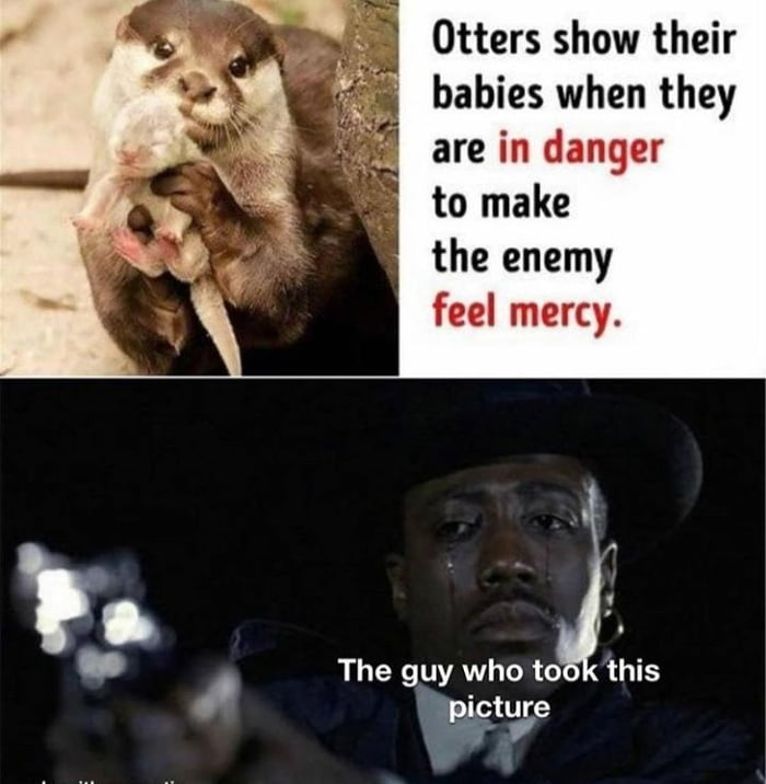 When Otters are in danger