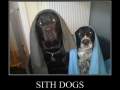 Sith dogs