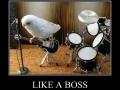 The Bird Brains