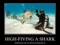 High-fiving a shark