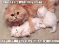 My marshmallows!