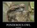 Ponderous owl