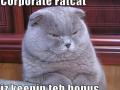 Ze fat kitty