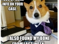 Best of Lawyer Dog