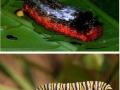 Just some caterpillars