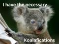 Koala story, bro