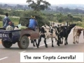 The New Toyota Cowrolla.