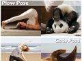 Yoga positions by animals