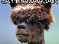 Don't call Alpacas, Llamas!