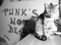 Epic cat is epic