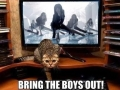 Cats know how to boogie