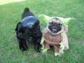Yoda & Darth Vader