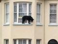 Animals doing stupid things