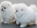 I'm sooooo fluffy!!!