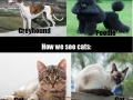 Truth about cats & dogs